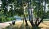 Уфа - Санатории, Базы отдыха - пансионат с лечением «Карагайский бор». 800 р. в сутки - фото недвижимости 21