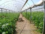 Уфа - Земельные участки - Продается огуречное хозяйство в Ростовской области - Лот 1190