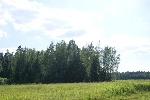 Уфа - Земельные участки: ИЖС - Участок  на лесной поляне. 28 км от МКАД. - Лот 1236