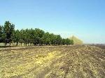 Уфа - Земельные участки: ИЖС - Продается земельный участок 17 соток в с. Нагаево - Лот 756